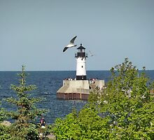 Seagulls by the Lighthouse by Diane Trummer Sullivan