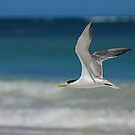 Solo flight by Michelle *