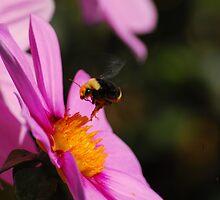 Springtime Fling by kjayne