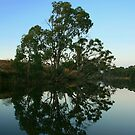Loddon River Reflections - Bridgewater Victoria by Rachael Taylor