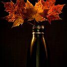 Autumn nostalgia  by Freelancer