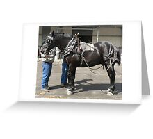 Black Percheron Gelding - Sydney Royal Greeting Card