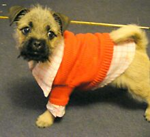 Bow in her winter jumper by Livvy Young