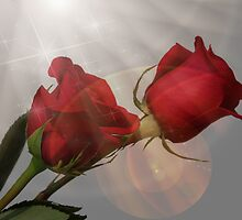 Magical Roses by Judy Vincent