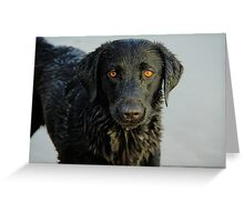 Amber Stare - Scrabster Beach, Caithness Greeting Card