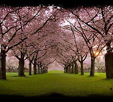 Springdream by foto-art