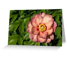 Exotic Beauty - Unusual Peony Basking in the Sunshine Greeting Card