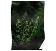 irish fern, Irish wild flower Poster