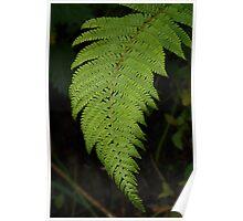 irish fern!! almost 3D Poster