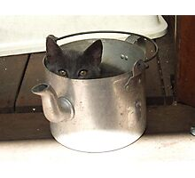 Kettle Full Of Kitty Photographic Print