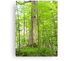 The Delaware Water Gap Canvas Print