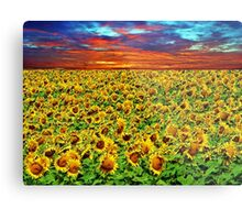 Sundown Sunflowers Metal Print