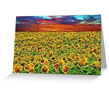 Sundown Sunflowers Greeting Card