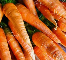 Organic Homegrown Carrots by Renee D. Miranda