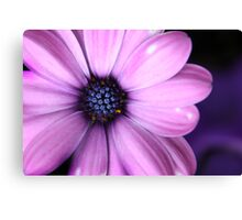 Purple Glory Canvas Print