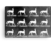 A Study of the Movement of Centaurs (Canter). Metal Print