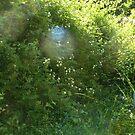 rose bush league by doreen connors