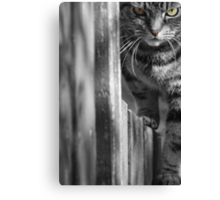 Cat on the Fence Canvas Print