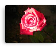 Pink Affection Canvas Print
