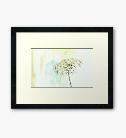 Queen Anne's Lace Watercolor Sketch Framed Print