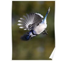 Dropping In / Bluejay Poster