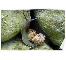 Snails version of 'Piggy back!' Poster