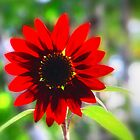Sundrenched Red Sunflower by WarrenMangione