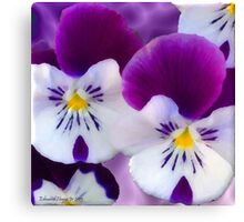 Pansy Flower Canvas Print