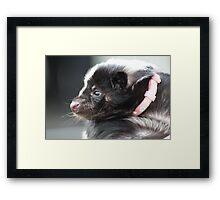 Le Skunk! Framed Print