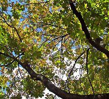 Chestnut Trees in a Munich Biergarten by David J Dionne