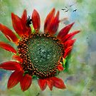 Sunflower Petals Of Flame Against The Sky by Diane Schuster