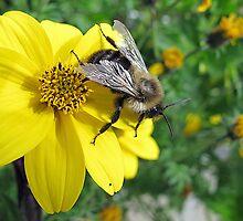 ~ A Bee-ootiful Day ~ by Brenda Boisvert