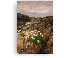 Sanna Bay, Ardnamurchan, Highland, Scotland Canvas Print