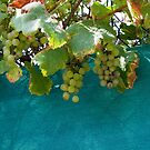 Grapes in Rieux by Alan Gillam
