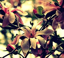A Spring Song by Evita