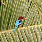 Kingfisher by Alan Gillam