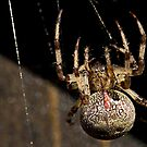 big spider by Manon Boily