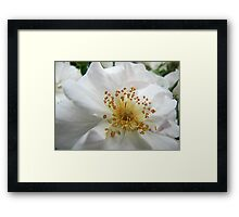 Touch of Tranquility Framed Print