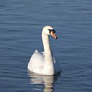 The white swan by Alan Gillam