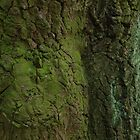 bark of an old  mossy oak tree by bepi