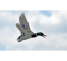 Mallard Mission Photographic Print