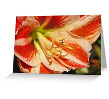 Blissful Lily Greeting Card
