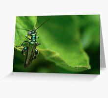 Oedemera nobilis on green Greeting Card