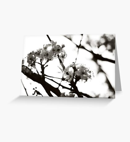 Black and White Cherry Blossoms Greeting Card