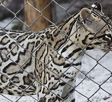 Cat in the Cage... by TRichwine