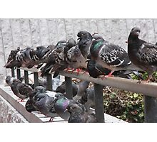 Pigeon Party Photographic Print