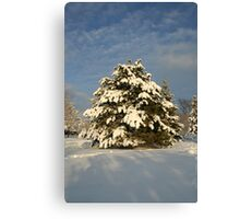 Waiting for next Christmas Canvas Print