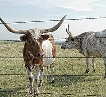 Texas Longhorns by Colleen Drew