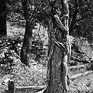 The Stump by thruHislens .