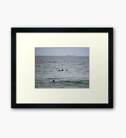 Surfing Dolphins @ Newcastle Framed Print